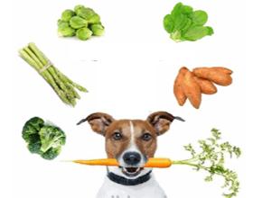 Какие овощи можно давать собаке, а какие нет