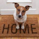 Сколько собак можно держать в квартире (по закону)