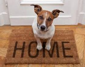 Сколько собак можно держать в квартире