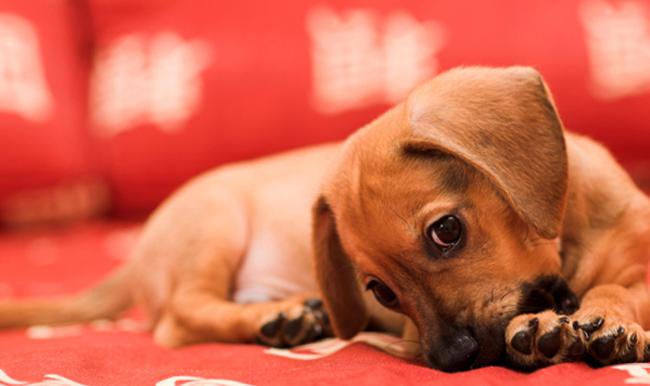 Собака с болезнью