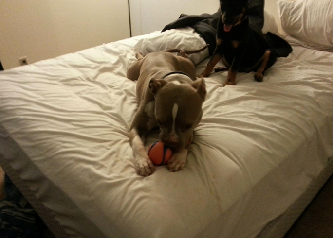 Собаки дома