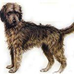 Породы легавых собак (с фотографиями и названиями)