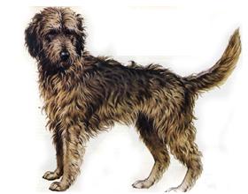 легавые породы собак для охоты