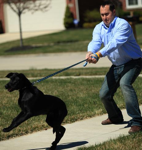 Собака и поводок