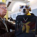 Как перевозить собаку в самолете(по России и за границу) — правила и советы