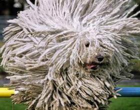 Самые пушистые породы собак