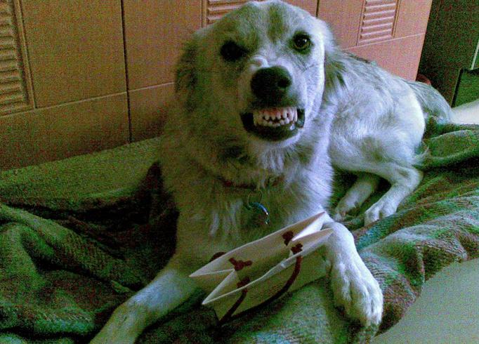 Собака скрипит своими зубами