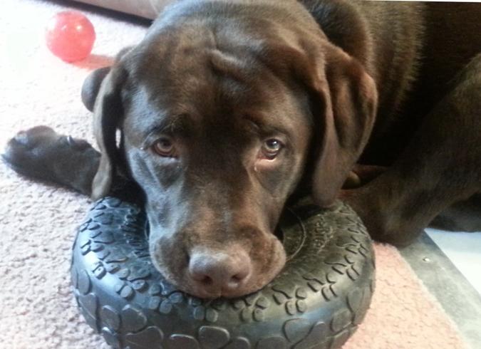 Собака страдает от кисты