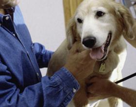 Какая должна быть норма пульса у собаки