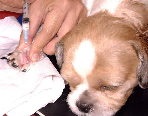 Ветеринар лечит собаку