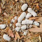 Белый кал у собаки: причины и что делать