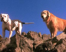 Лучшие фильмы про собак: список и описание
