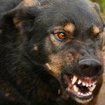 Что делать если собака стала агрессивной?