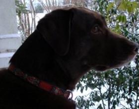 Повышеный АЛТ в крови у собаки