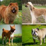 10 самых глупых пород собак