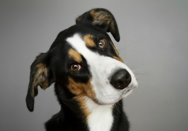 У пса брадикардия