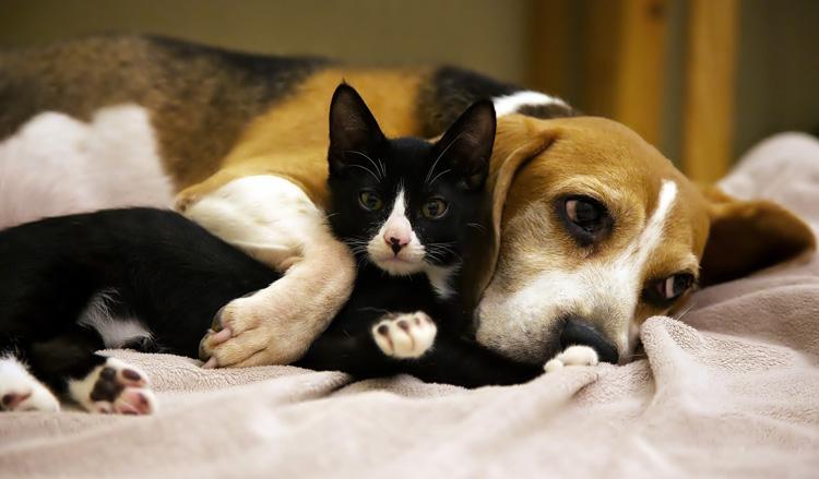 Собака в обнимку с кошкой