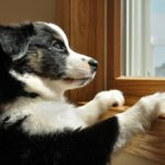 Как приучить собаку оставаться одной дома