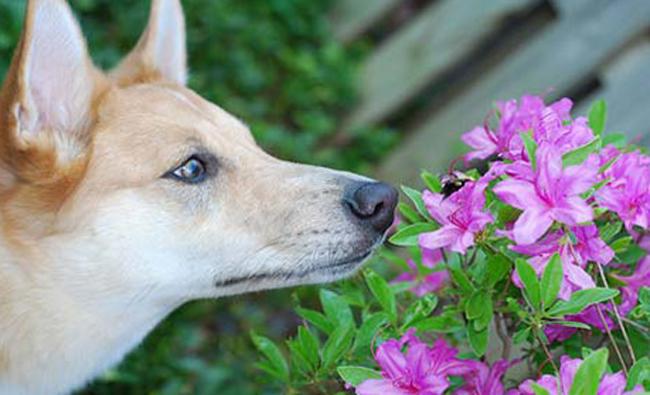 Собака и цветочек