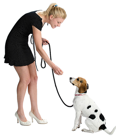 Собаку приучают к ошейнику