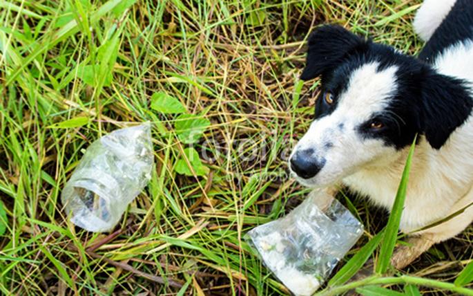 Собака и пакетик