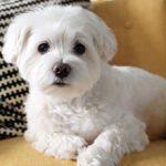 Стоит ли заводить собаку в квартире — плюсы и минусы