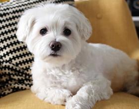 Стоит ли заводить собаку в квартире