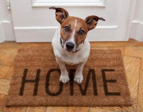 Сколько в среднем живут собаки в домашних условиях