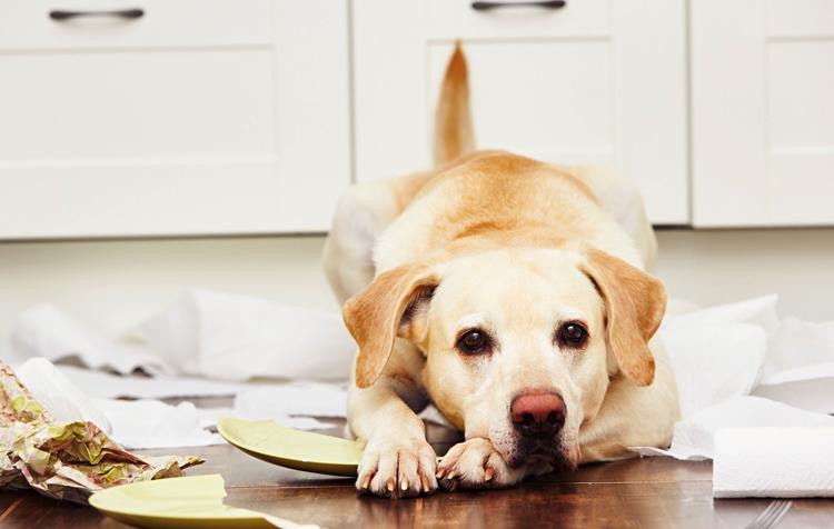 Собака на кухне