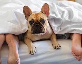 Почему собака спит в ногах