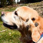 Что делать если собака съела репейник