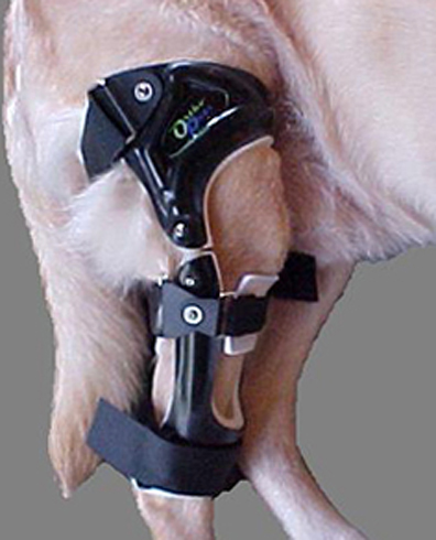 Фиксация для собаки
