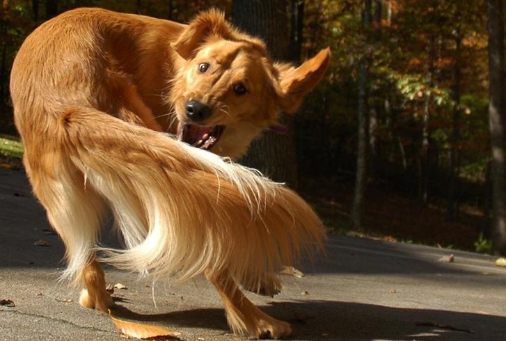 Собака и хвост