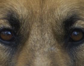 Могут ли собаки различать цвета?