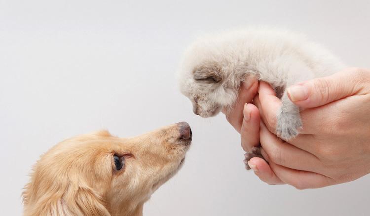 Знакомства кошки и собаки