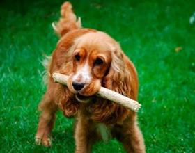 Как научить собаку команде «Апорт»