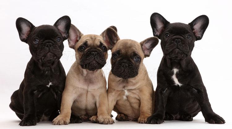 Красивые щенки