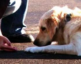 """Как научить собаку команде """"лежать"""""""