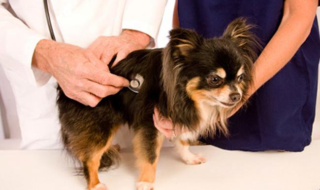 Лечение собачки