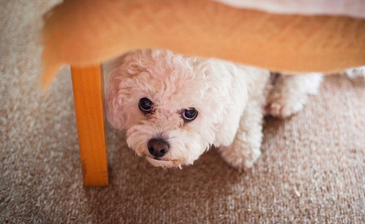 Недержание у собаки