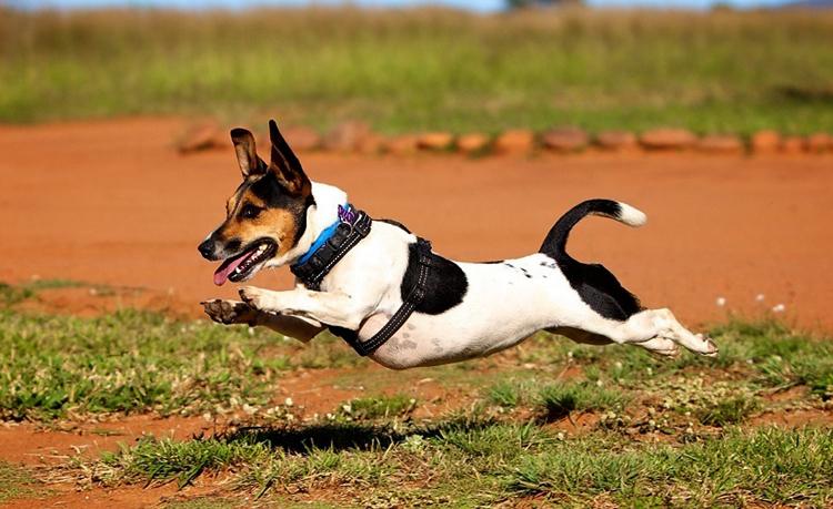 Собака быстро бежит