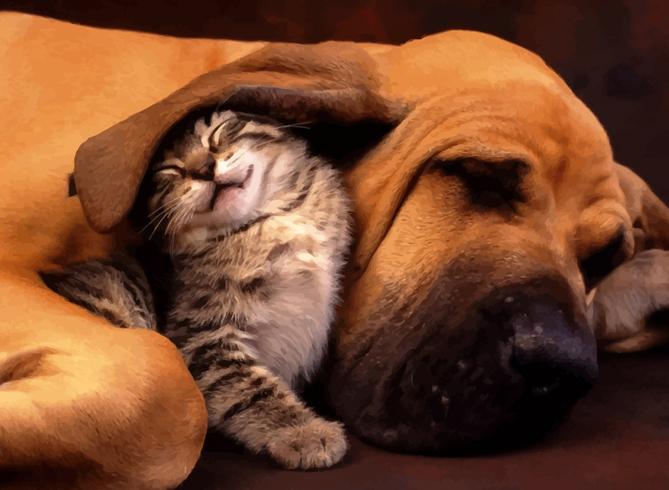 Собачка с кошкой