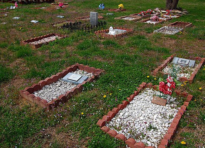 Легальное кладбище собак