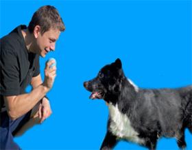 Как научить собаку приносить палку или мяч