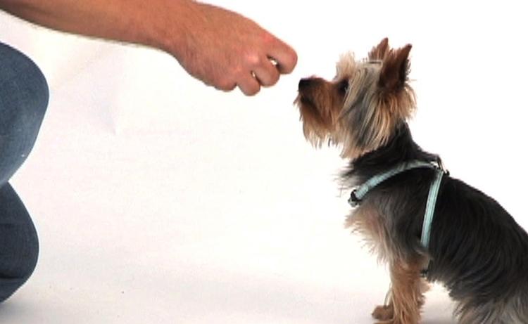 Собака и поощрения