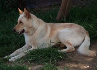 Соломенная собака сидит