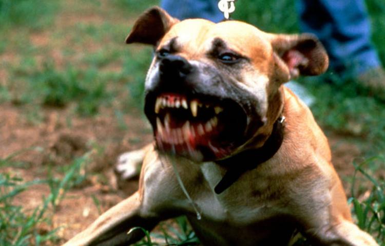 Злой пес на улице