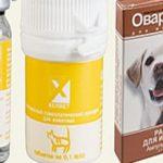Овариовит — описание и инструкция по применению для собак