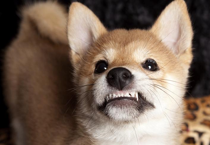 У пса воняет изо рта