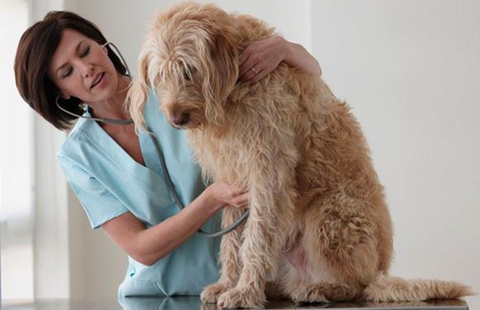 Пес у ветеринара